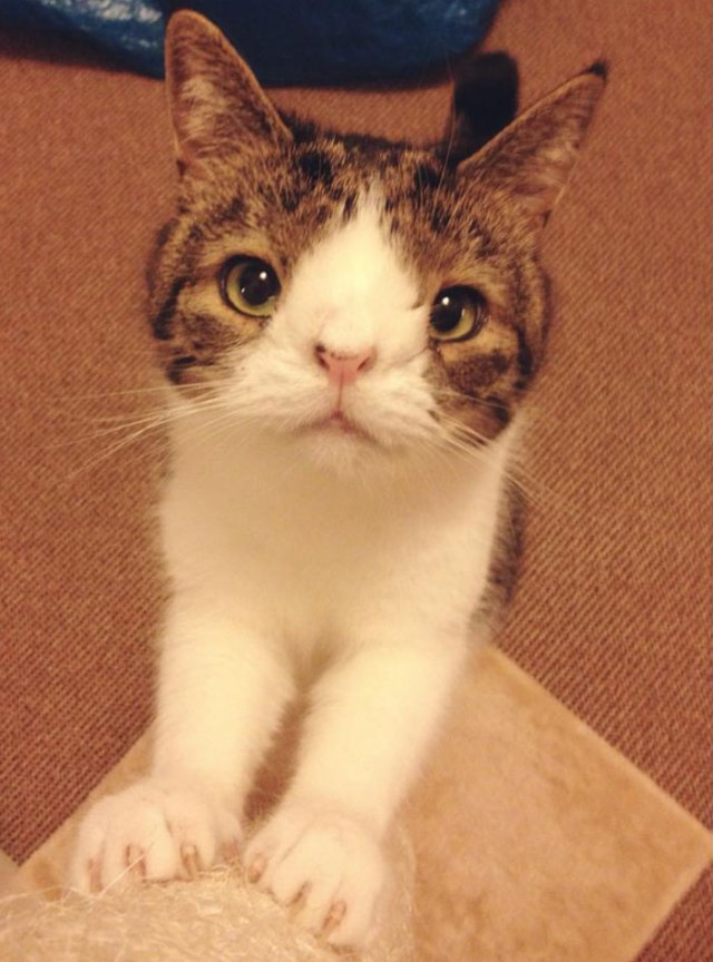 """""""We wish for Monty to be an ambassador for 'crooked' cats or cats that may not look perfect in everyone's eyes!"""""""
