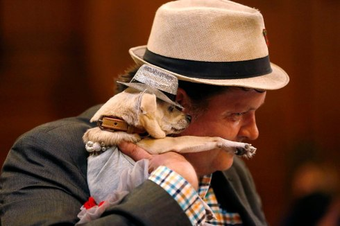 "Dean Clark embraces Frida, a female Chihuahua, as the San Francisco Board of Supervisors issues a special commendation naming Frida ""Mayor of San Francisco for a Day"" in San Francisco, California November 18, 2014. (Photo by Stephen Lam/Reuters)"