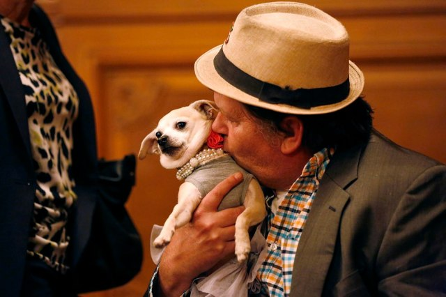 """Dean Clark kisses Frida, a female Chihuahua, while waiting for the San Francisco Board of Supervisors to issue a special commendation naming Frida """"Mayor of San Francisco for a Day"""" in San Francisco, California November 18, 2014. (Photo by Stephen Lam/Reuters)"""