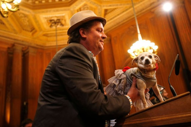 """Frida, a female Chihuahua (R), stands on a podium before the San Francisco Board of Supervisors issues a special commendation naming Frida """"Mayor of San Francisco for a Day"""" in San Francisco, California November 18, 2014. (Photo by Stephen Lam/Reuters)"""