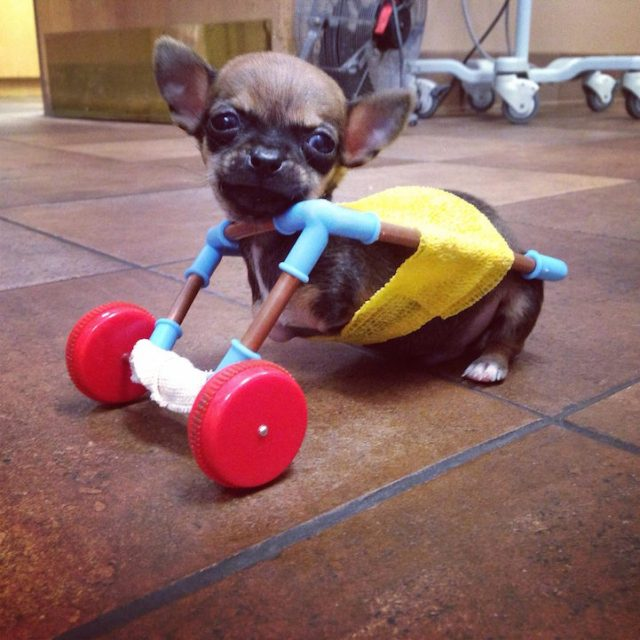 TurboRoo using one of the early carts his owner made out of toy parts.