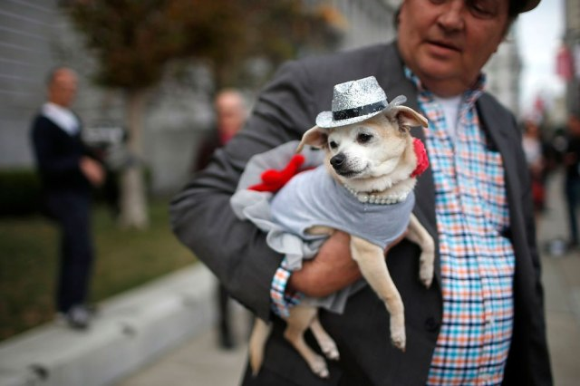"""Frida, a female Chihuahua, rests in the arms of her owner, Dean Clark, outside City Hall before the San Francisco Board of Supervisors issued a special commendation naming Frida """"Mayor of San Francisco for a Day"""" in San Francisco, California November 18, 2014. (Photo by Stephen Lam/Reuters)"""
