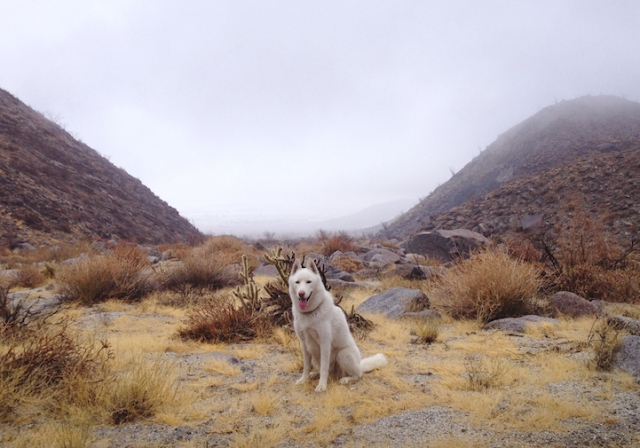 Foggy morning in the Anza Borrego desert, CA