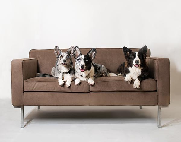 Three Corgis and Boerner Two-Seater Sofa