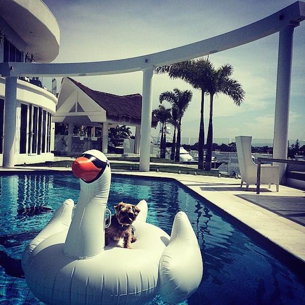 Just sunbathing on Swan Lake.
