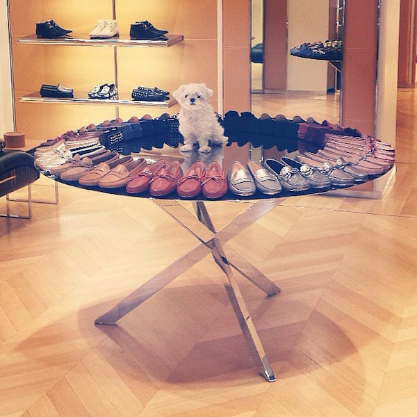 Shout out to Kim K for organizing my canine closet.