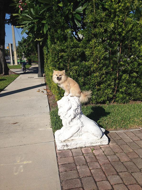 Tomas Werner: Lion Statue