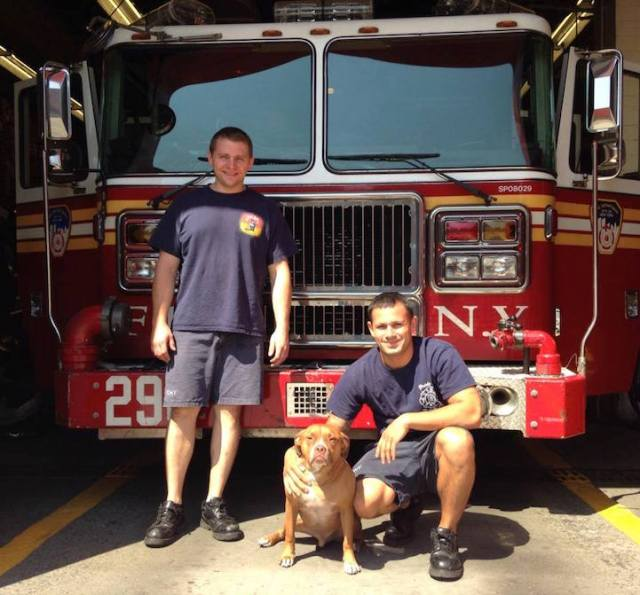 """Red lives at a fire station in East New York, Brooklyn. He's been the mascot for the past 6 years. """"The police found him running around the projects and thought he might be a vicious dog. They brought him here and we decided to keep him."""""""
