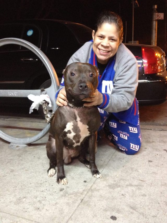 """Dollar Bill is a 2-year-old dog from Bushwick, Brooklyn. """"He's so nice, we love him so much. He's the perfect house pit!"""""""
