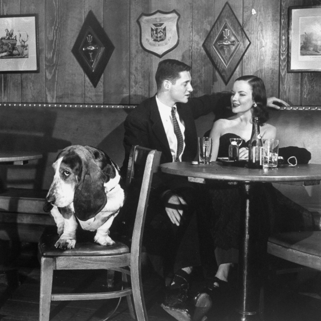 TV star dog J. J. Morgan (L) acting as a third date on the television show Blind Date. (Photo by Walter Sanders/The LIFE Picture Collection/Getty Images)