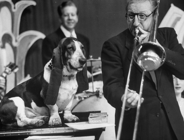 TV star dog J. J. Morgan (L) listening to trombonist Mike Riley play. (Photo by Walter Sanders/The LIFE Picture Collection/Getty Images)