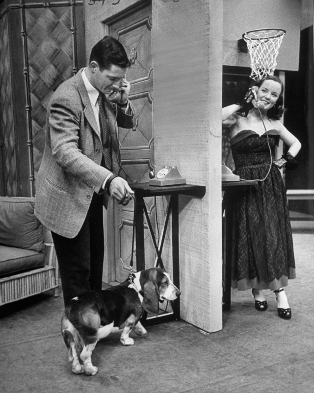TV star dog J. J. Morgan walking standing with Bill Grady as he talks with Laurie Collier on the phone. (Photo by Walter Sanders/The LIFE Picture Collection/Getty Images)