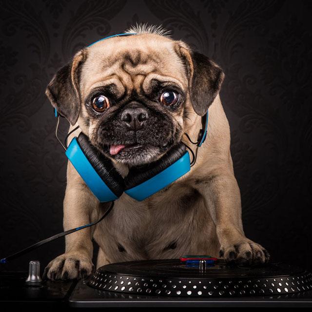 Pug Master Flash