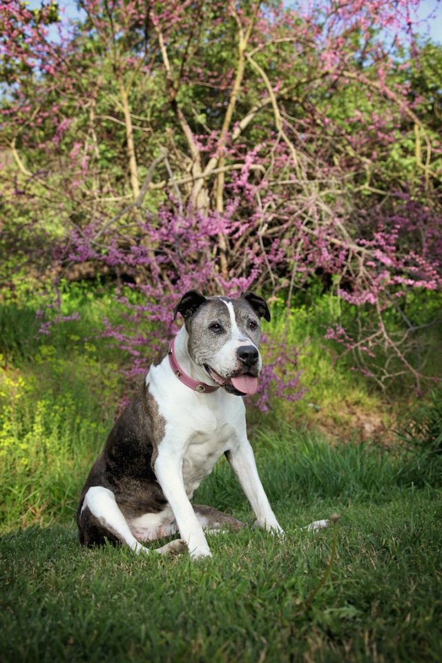 """""""The book's dedication page reads, 'This book is dedicated to all the older dogs who deserve to have remarkable second acts. And to Sunny, the dog who changed everything.'"""" (Copyright Lori Fusaro / """"My Old Dog"""")"""