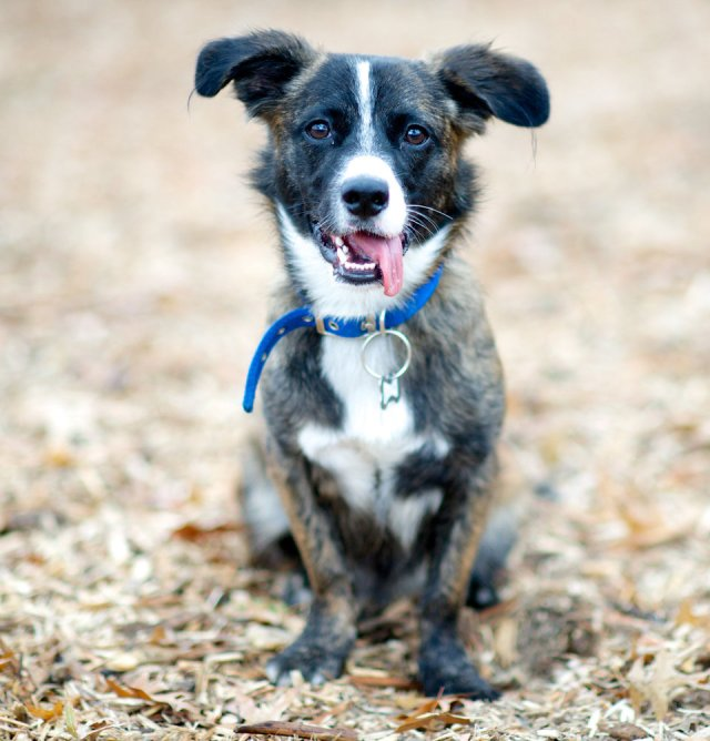 Cooper, Border Collie-Dachshund mix. Excerpted from The Dogist by Elias Weiss Friedman (Artisan Books). Copyright © 2015. Photographs by The Dogist, LLC.
