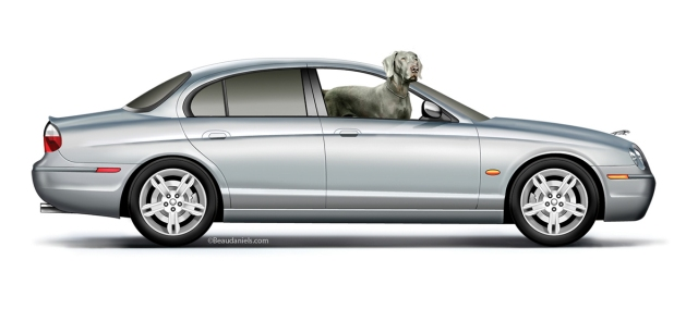 A Jaguar and a weimaraner