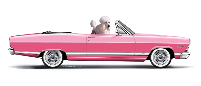 A 1966 Ford Fairlane and a Poodle